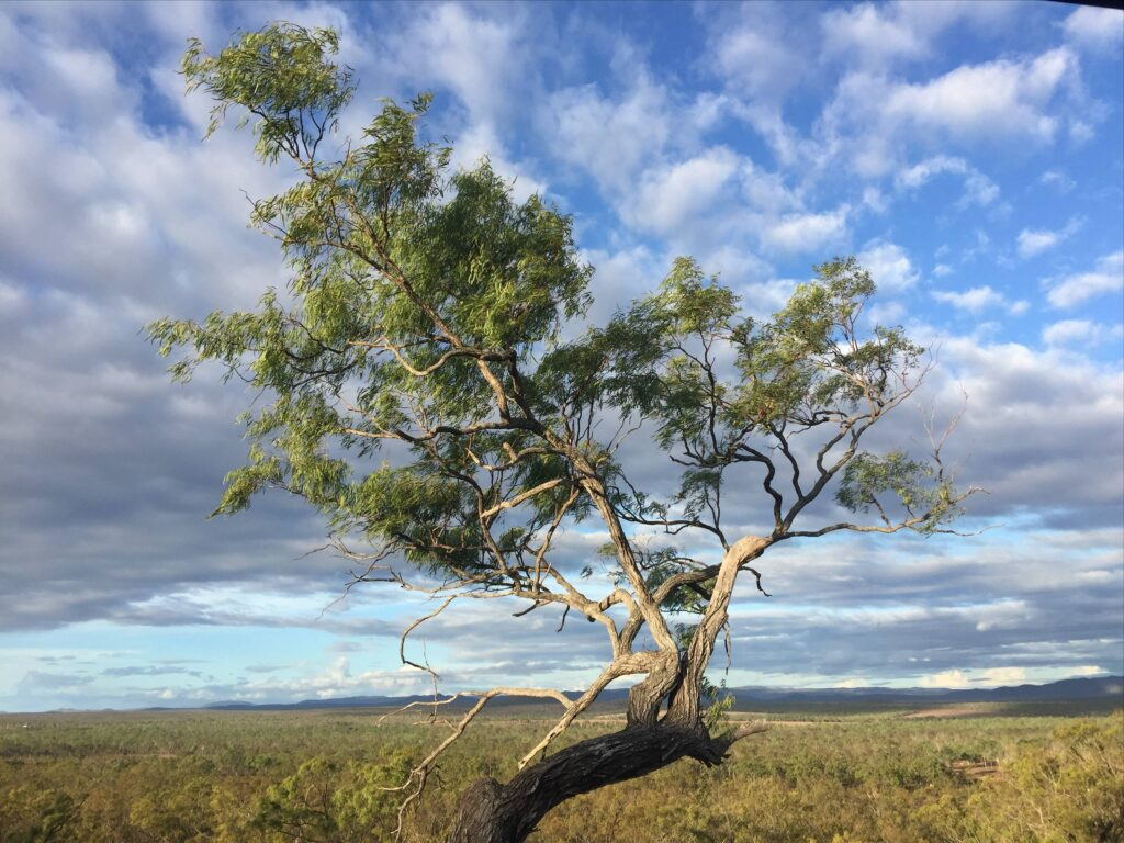 Outback Ironbark Tree Queensland Holiday-home Farm-stay Atherton Tablelands Horse riding