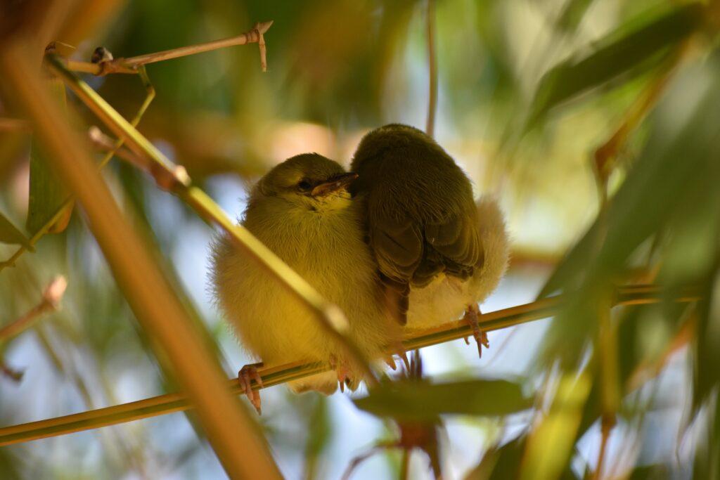 Outback Australia, Atherton Tablelands Cairns Eco tourism wildlife birds, horses, holiday house bush retreat