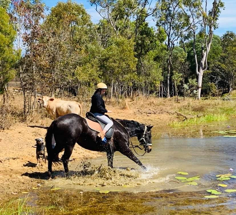 Horses, trail riding, outback Australia, holiday at home